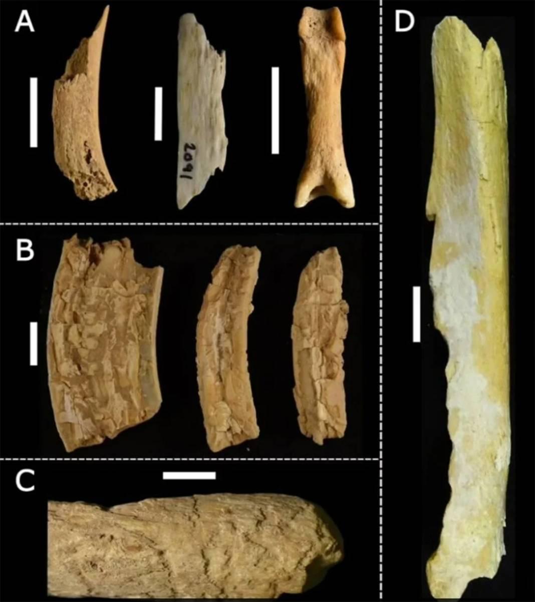 Araştırmacılar yıllarca korkudan giremedi: Mağaradaki on binlerce kemiğin gizemi çözüldü 4