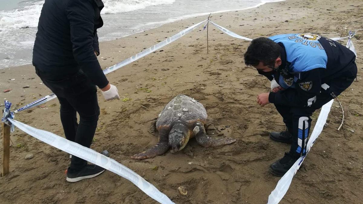 90 kiloluk caretta caretta ölü bulundu